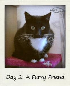 A Furry Friend