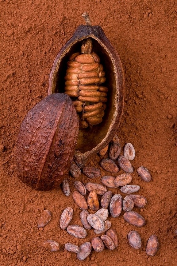 Cocoa pods take five to six months to develop