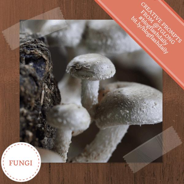 #BlogFlashDaily: Fungi