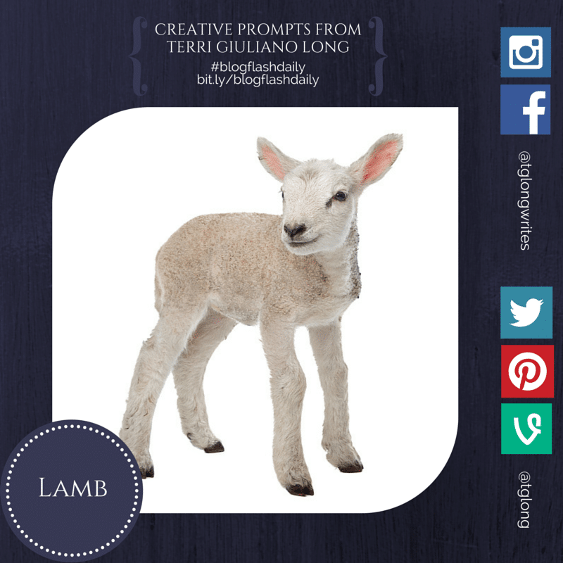 #BlogFlashDaily: Lamb