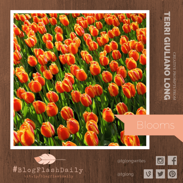 #BlogFlashDaily: Blooms