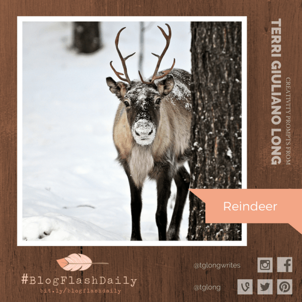 #BlogFlashDaily Creativity Prompt: Reindeer